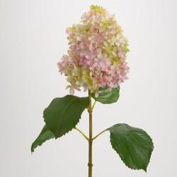 Branche d'hortensia...