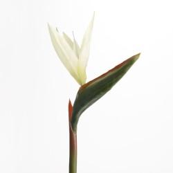 Oiseau du paradis blanc...