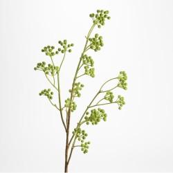 Branche de baies Florus...