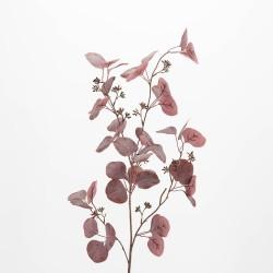 Branche d'eucalyptus Gunii...