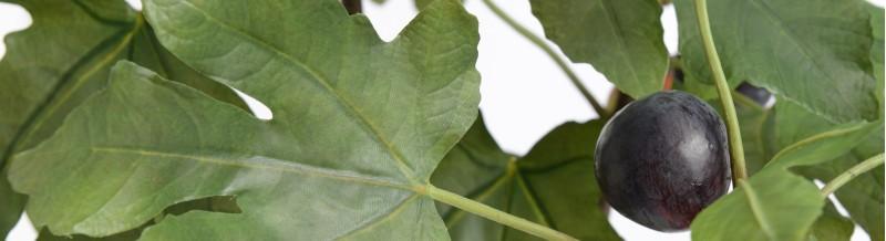 plantes et arbustes
